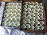 Trays of partially filled cups